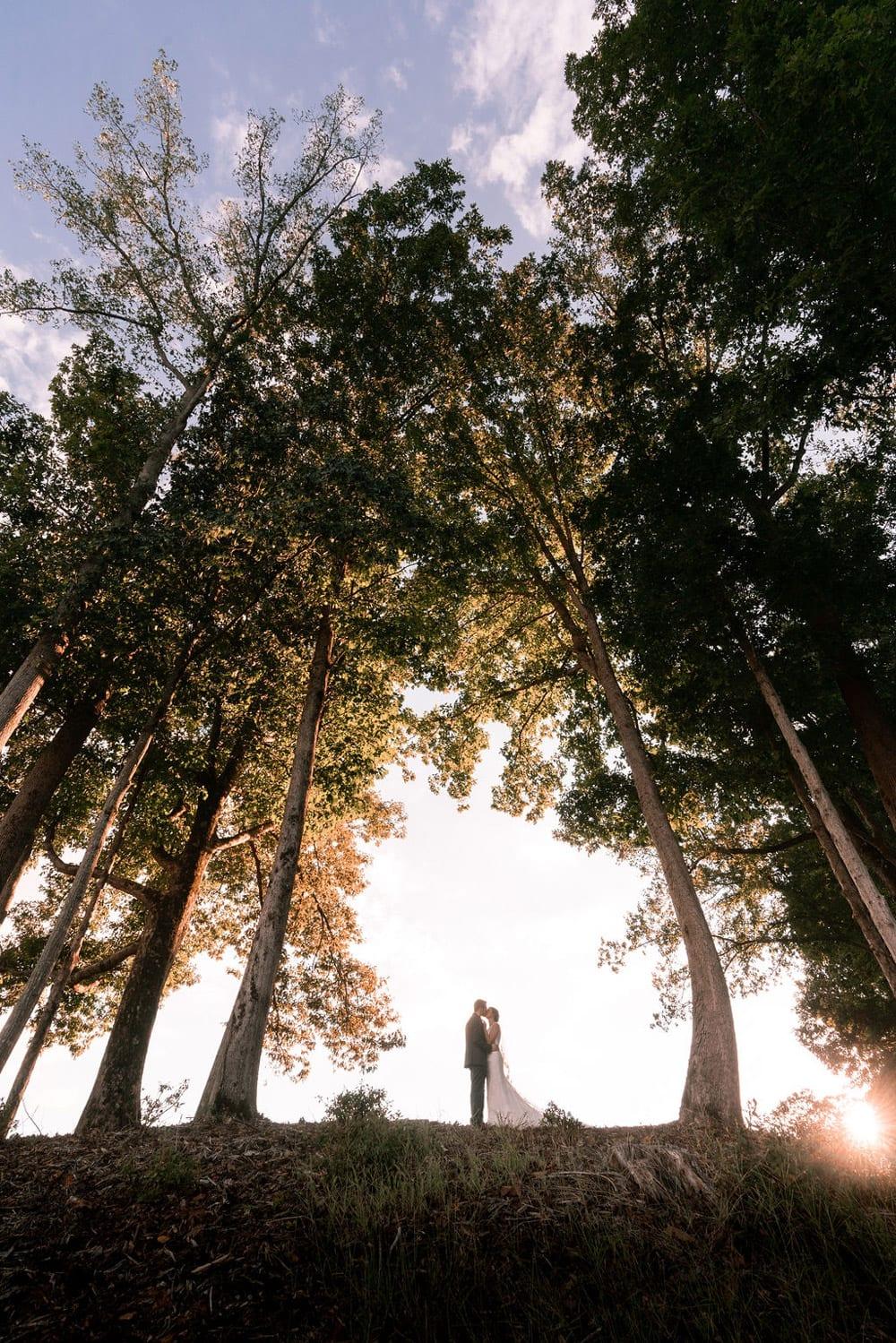 Bride and groom kiss between trees