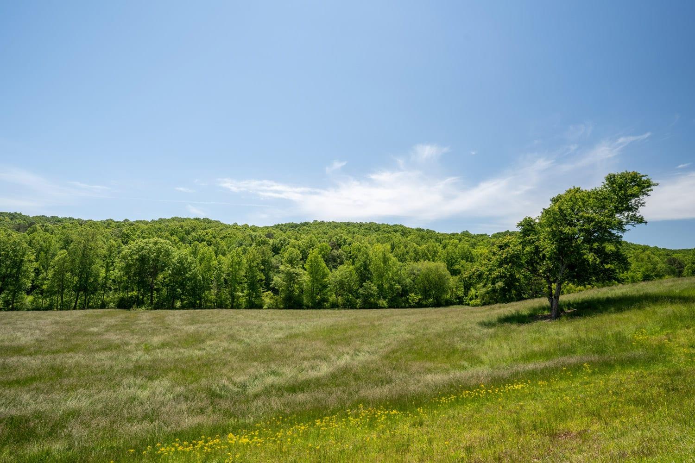 Pasture with tree